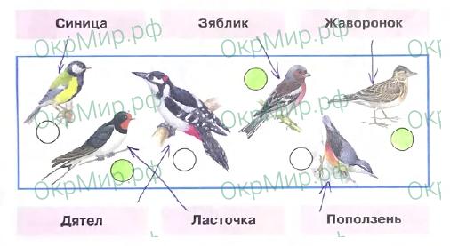 Рабочая тетрадь (Плешаков) 2 часть - 3. Где и когда?. Где зимуют птицы?, ответ 1