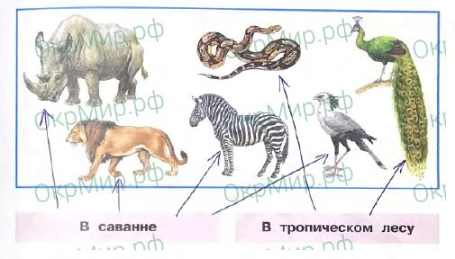 Рабочая тетрадь (Плешаков) 2 часть - 3. Где и когда?. Где живут слоны?, ответ 2