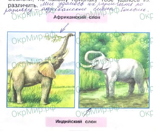 Рабочая тетрадь (Плешаков) 2 часть - 3. Где и когда?. Где живут слоны?, ответ 1