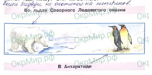 Рабочая тетрадь (Плешаков) 2 часть - 3. Где и когда?. Где живут белые медведи?, ответ 2