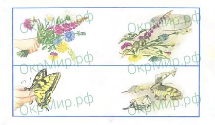 Рабочая тетрадь (Плешаков) 2 часть - 4. Почему и зачем?. Почему мы не будем рвать цветы и ловить бабочек?, ответ 6