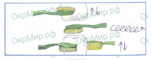 Рабочая тетрадь (Плешаков) 2 часть - 4. Почему и зачем?. Почему нужно чистить зубы и мыть руки?, ответ 1