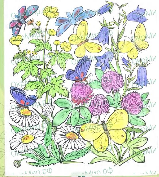 Рабочая тетрадь (Плешаков) 2 часть - 4. Почему и зачем?. Почему мы не будем рвать цветы и ловить бабочек?, ответ 5