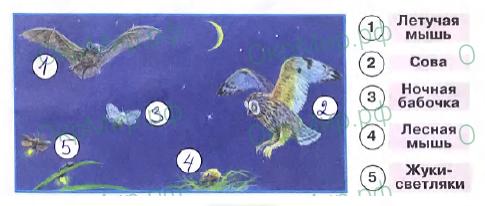 Рабочая тетрадь (Плешаков) 2 часть - 4. Почему и зачем?. Зачем мы спим ночью?, ответ 2