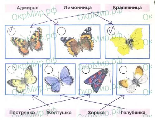 Рабочая тетрадь (Плешаков) 2 часть - 4. Почему и зачем?. Почему мы не будем рвать цветы и ловить бабочек?, ответ 3