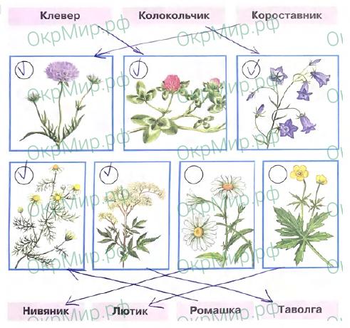 Рабочая тетрадь (Плешаков) 2 часть - 4. Почему и зачем?. Почему мы не будем рвать цветы и ловить бабочек?, ответ 1