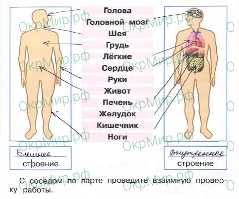 Рабочая тетрадь (Плешаков) 2 часть - 4. Здоровье и безопасность. Строение тела человека, ответ 1