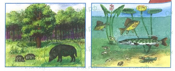Рабочая тетрадь (Плешаков) 1 часть - 1. Как устроен мир. Что такое экология, ответ 3