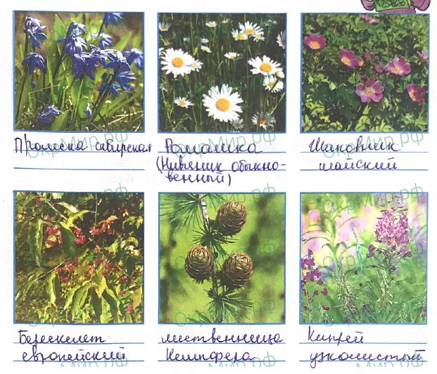 Рабочая тетрадь (Плешаков) 1 часть - 2. Эта удивительная природа. Разнообразие растений, ответ 7