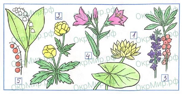 Рабочая тетрадь (Плешаков) 1 часть - 2. Эта удивительная природа. Охрана растений, ответ 4