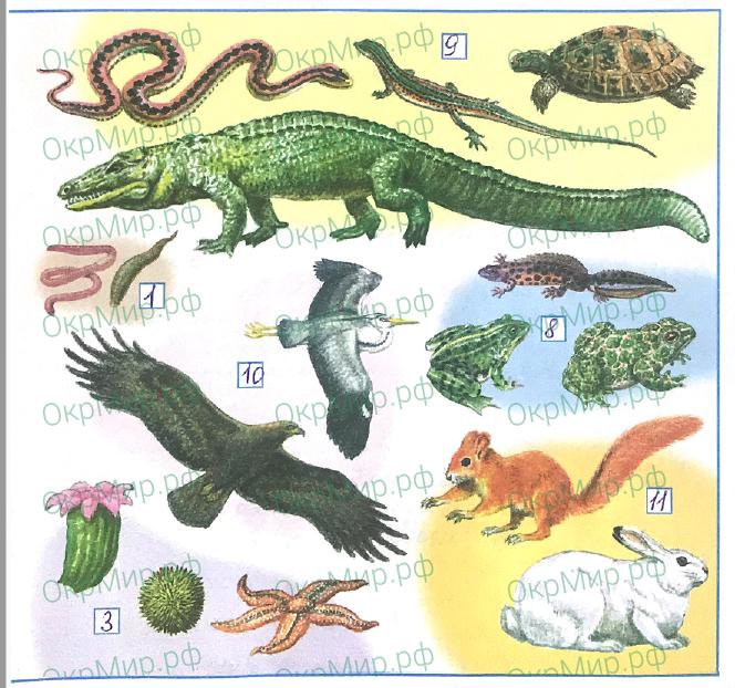 Рабочая тетрадь (Плешаков) 1 часть - 2. Эта удивительная природа. Разнообразие животных, ответ 3