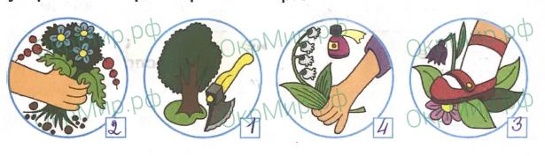 Рабочая тетрадь (Плешаков) 1 часть - 2. Эта удивительная природа. Охрана растений, ответ 2