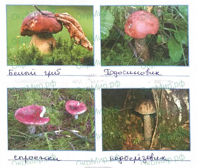 Рабочая тетрадь (Плешаков) 1 часть - 2. Эта удивительная природа. В царстве грибов, ответ 4