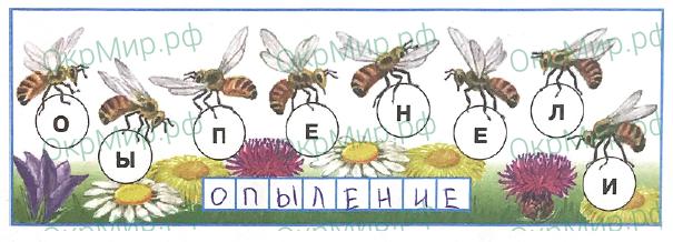 Рабочая тетрадь (Плешаков) 1 часть - 2. Эта удивительная природа. Размножение и развитие растений, ответ 1