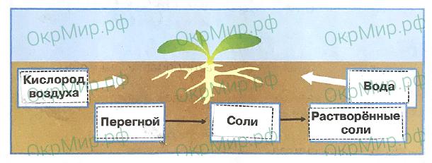Рабочая тетрадь (Плешаков) 1 часть - 2. Эта удивительная природа. Что такое почва, ответ 5