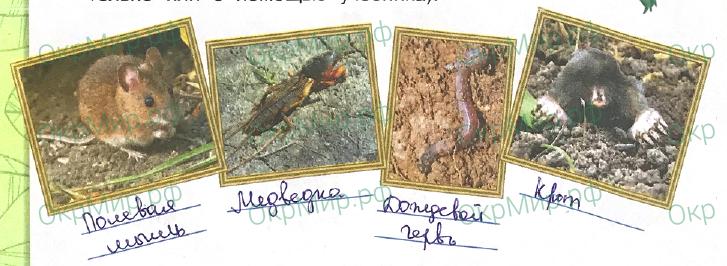 Рабочая тетрадь (Плешаков) 1 часть - 2. Эта удивительная природа. Что такое почва, ответ 2