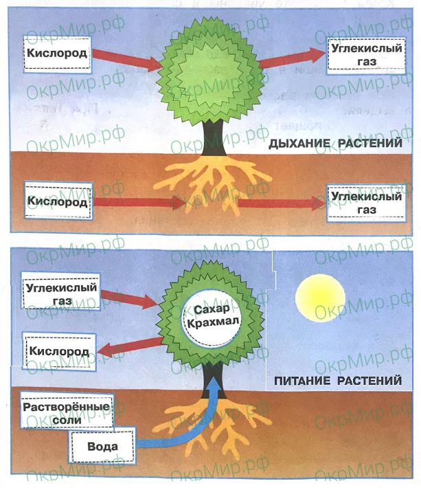 Рабочая тетрадь (Плешаков) 1 часть - 2. Эта удивительная природа. Солнце, растения и мы с вами, ответ 1