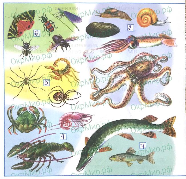 Рабочая тетрадь (Плешаков) 1 часть - 2. Эта удивительная природа. Разнообразие животных, ответ 1