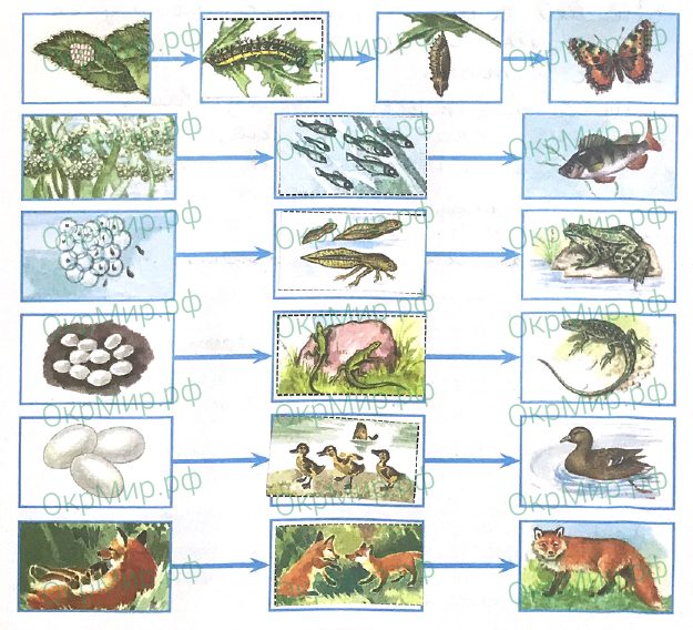 Рабочая тетрадь (Плешаков) 1 часть - 2. Эта удивительная природа. Размножение и развитие животных, ответ 4