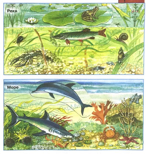 Рабочая тетрадь (Плешаков) 1 часть - 2. Эта удивительная природа. Вода, ответ 3