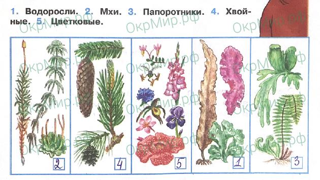 Рабочая тетрадь (Плешаков) 1 часть - 2. Эта удивительная природа. Разнообразие растений, ответ 1