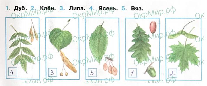 Рабочая тетрадь (Плешаков, Крючкова) 1 часть - 2. Природа России. Леса России, ответ 3