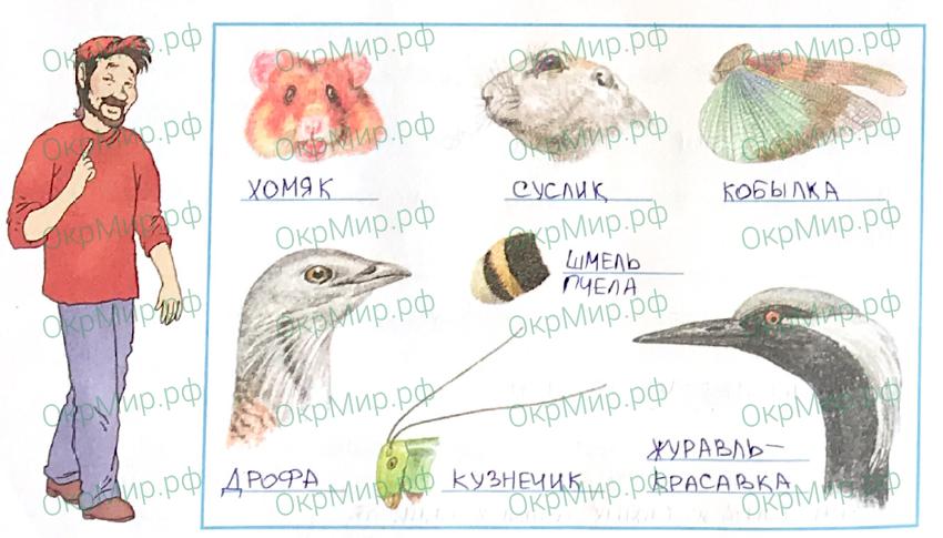 Рабочая тетрадь (Плешаков, Крючкова) 1 часть - 2. Природа России. Зона степей, ответ 4