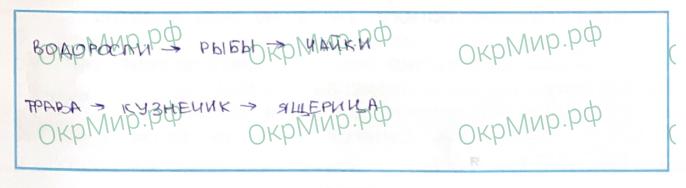 Рабочая тетрадь (Плешаков, Крючкова) 1 часть - 2. Природа России. У Чёрного моря, ответ 5