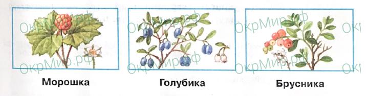 Рабочая тетрадь (Плешаков, Крючкова) 1 часть - 2. Природа России. Тундра, ответ 4