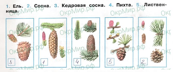 Рабочая тетрадь (Плешаков, Крючкова) 1 часть - 2. Природа России. Леса России, ответ 2