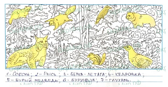 Рабочая тетрадь (Плешаков, Крючкова) 1 часть - 2. Природа России. Леса России, ответ 4