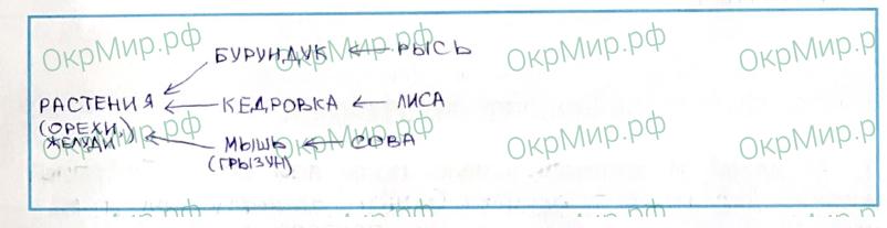Рабочая тетрадь (Плешаков, Крючкова) 1 часть - 2. Природа России. Леса России, ответ 7