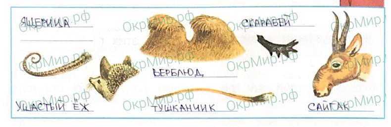 Рабочая тетрадь (Плешаков, Крючкова) 1 часть - 2. Природа России. Пустыни, ответ 4