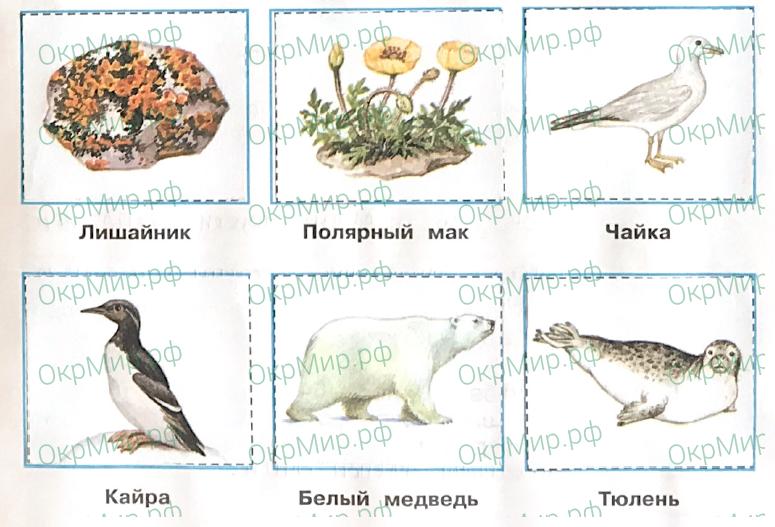 Рабочая тетрадь (Плешаков, Крючкова) 1 часть - 2. Природа России. Зона арктических пустынь, ответ 2