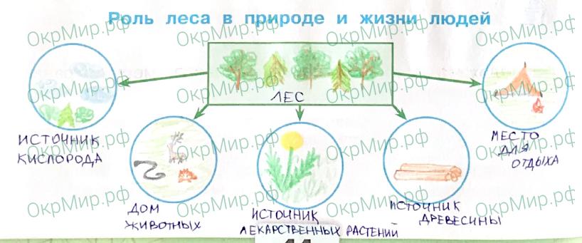 Рабочая тетрадь (Плешаков, Крючкова) 1 часть - 2. Природа России. Лес и человек, ответ 2