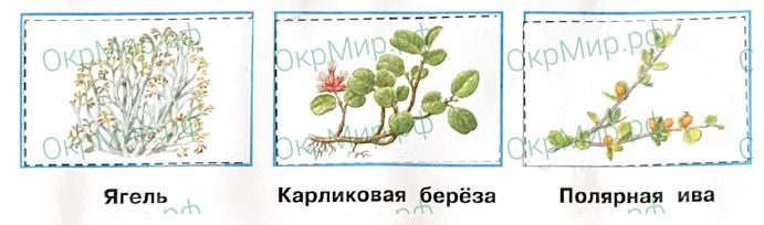 Рабочая тетрадь (Плешаков, Крючкова) 1 часть - 2. Природа России. Тундра, ответ 2