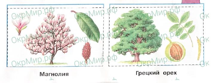 Рабочая тетрадь (Плешаков, Крючкова) 1 часть - 2. Природа России. У Чёрного моря, ответ 2