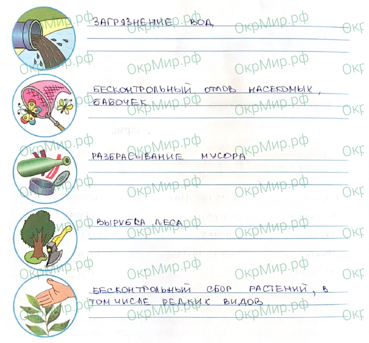Рабочая тетрадь (Плешаков, Крючкова) 1 часть - 2. Природа России. У Чёрного моря, ответ 6