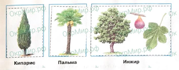 Рабочая тетрадь (Плешаков, Крючкова) 1 часть - 2. Природа России. У Чёрного моря, ответ 3