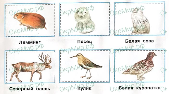 Рабочая тетрадь (Плешаков, Крючкова) 1 часть - 2. Природа России. Тундра, ответ 3