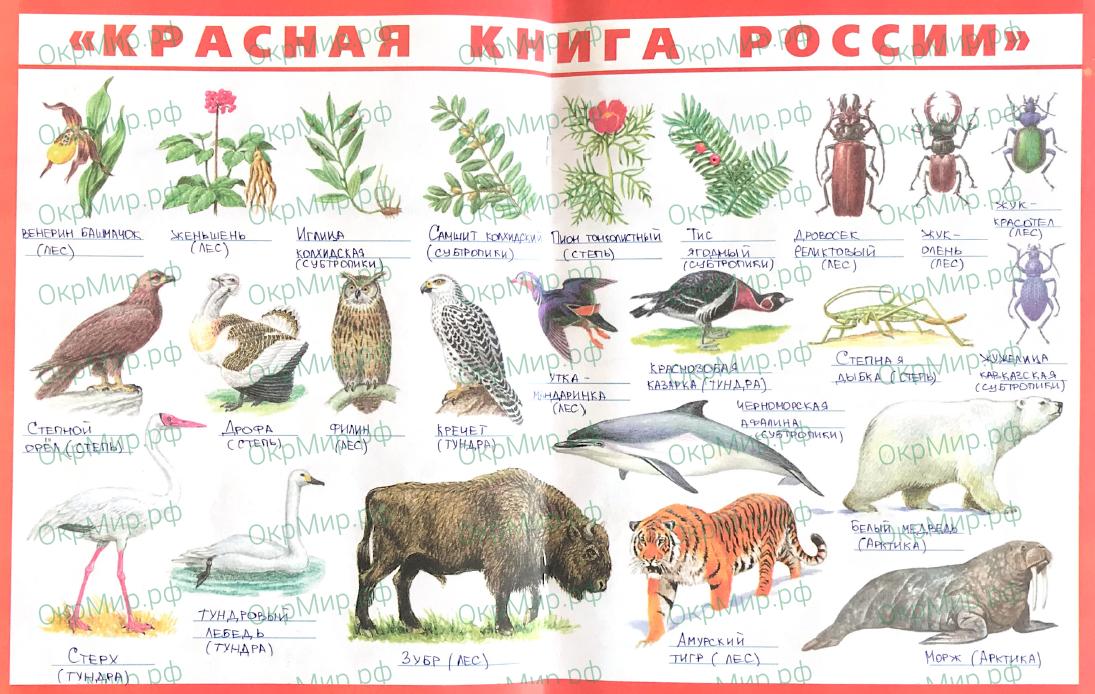 Рабочая тетрадь (Плешаков, Крючкова) 1 часть - 2. Природа России. Тундра, ответ 7