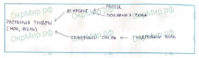 Рабочая тетрадь (Плешаков, Крючкова) 1 часть - 2. Природа России. Тундра, ответ 5