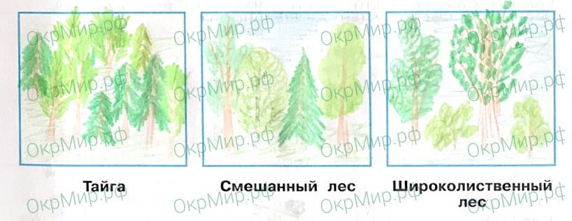 Рабочая тетрадь (Плешаков, Крючкова) 1 часть - 2. Природа России. Леса России, ответ 8