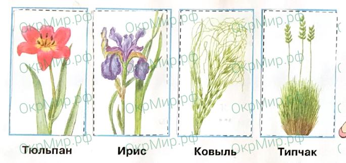 Рабочая тетрадь (Плешаков, Крючкова) 1 часть - 2. Природа России. Зона степей, ответ 3