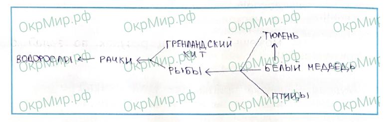 Рабочая тетрадь (Плешаков, Крючкова) 1 часть - 2. Природа России. Зона арктических пустынь, ответ 3